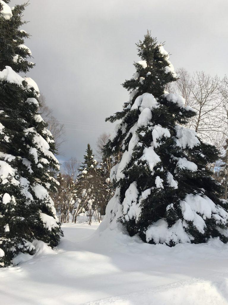Snowy trees shortbread recipe