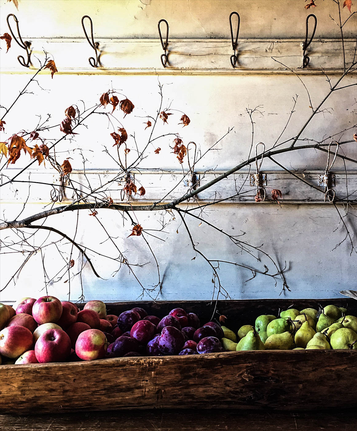 autumn apples, pears and plums