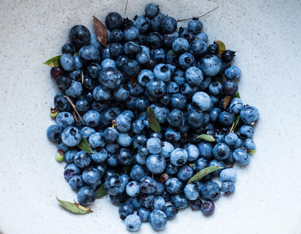 Wild Nova Scotia Blueberries