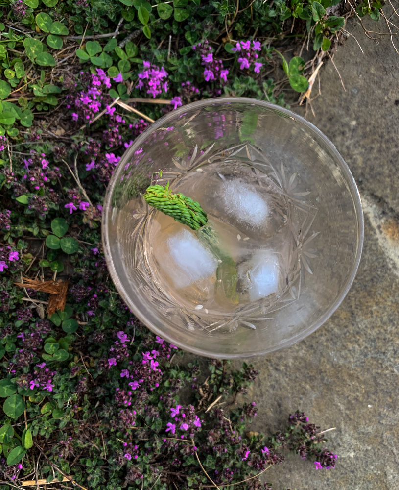 Spruce Tips cocktail