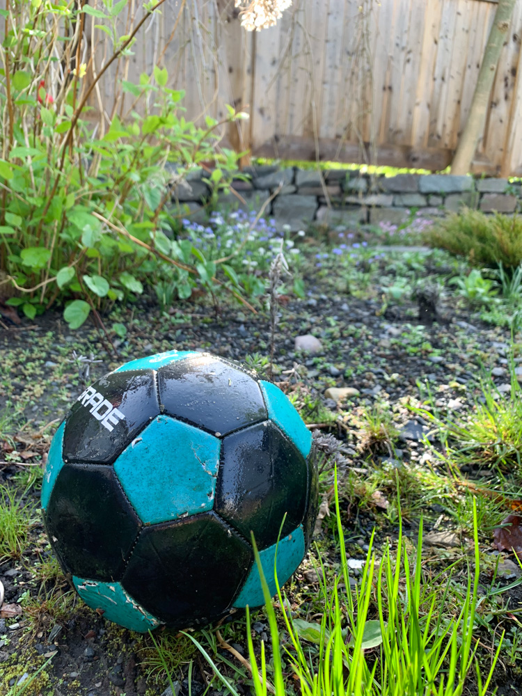 Soccer ball in the garden